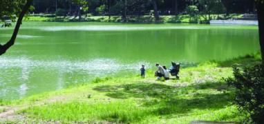 Parque da Aclimação-Divulgação