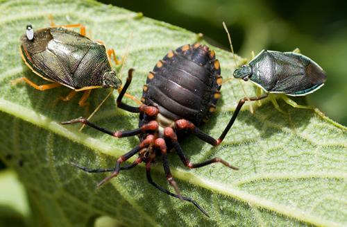 Planeta insetos - Divulgação